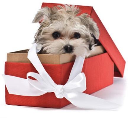 Подарок для собаководов 16