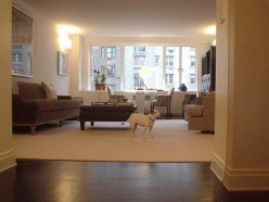 Top 10 tips in keeping apartment dogs