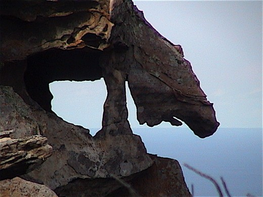 Here is another weather affected ROCK SCULPTURE on the ILLAWARRA ESCARPMENT. This sits above the coastal village of Coalcliff.