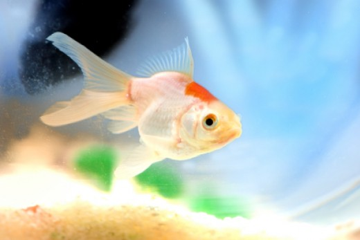 Glad and healthy tropical pet fish for Exotic fish and pets