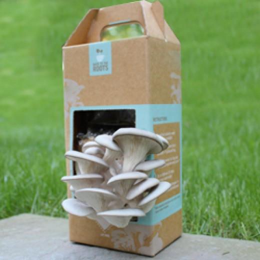 Грунт для грибов
