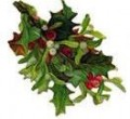 Vintage Christmas images: holly sprig