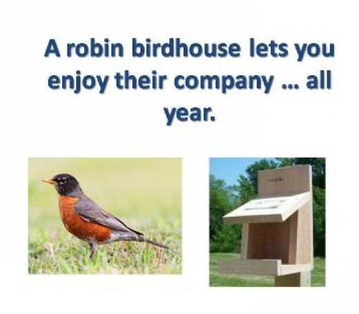 Robin bird house