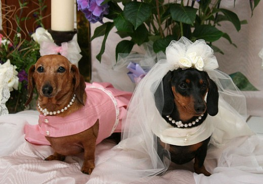 Cute Overload: Animals and weddings - Planning - Project ...