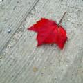 Take a Fall Photography Walk