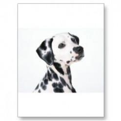 The Dalmatian Dog Breed