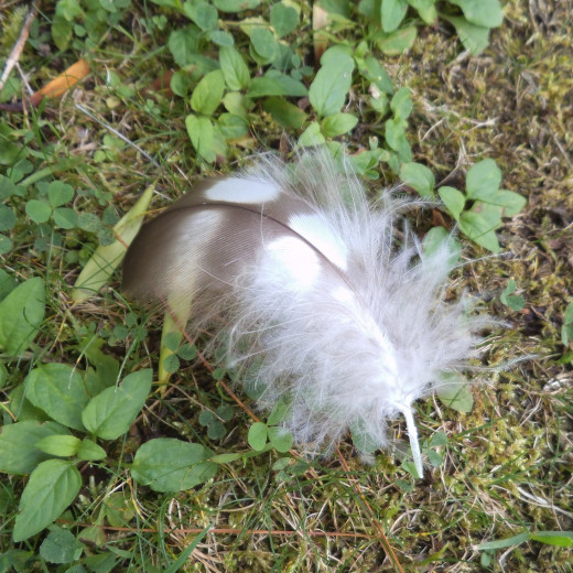 brown and white feather