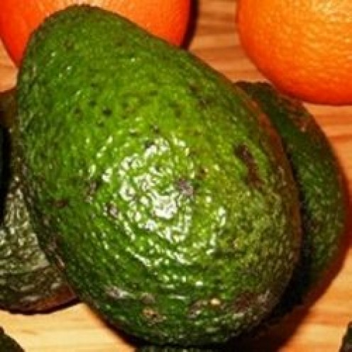 Unripened avocados by Barbs @ Synchronicity House