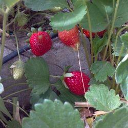 Photo credit: The Micro Farm Project