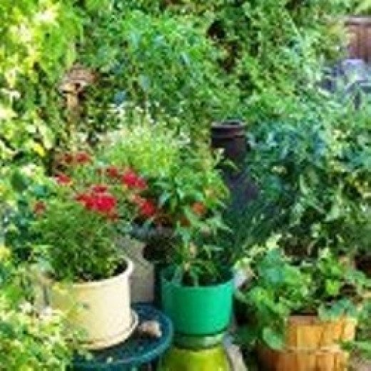 Big Living In Container Spaces: Successful Container Gardening: Growing Great Vegetables
