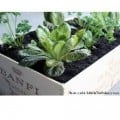Safe, Chemical-Free Wood Sealers for Raised Beds and Container Gardens