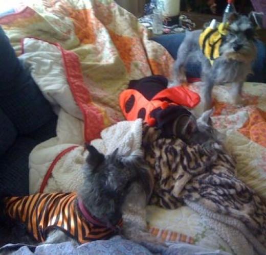 SueSue, Winnie & Ladybug