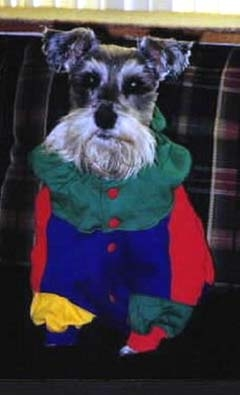 Shadow Marie Schnauzer, also beloved sister of Koko, was lost to very old age. We miss her!