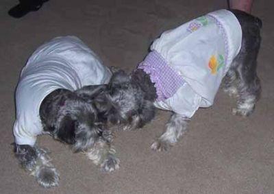 Bonnie & Little Blind Sarah, Sisters Forever