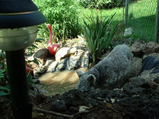 My favorite photo of all time, I think... my late beloved Sparky sniffing around near the pond I built by the patio.