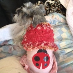 Diva Doggie Custom Fit Crochet Shrug Dog Sweater Free Crochet Pattern!