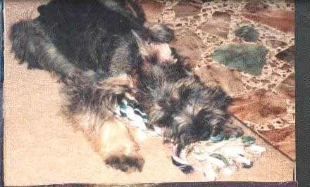 Sheina as a little puppy