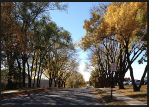 Autumn Trees In Papillion, Nebraska
