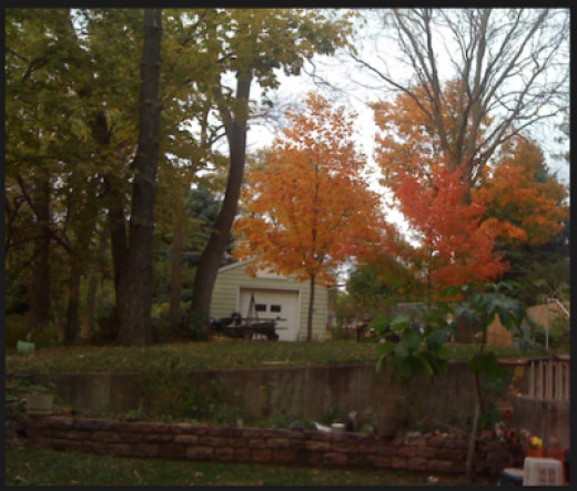My Trees & Raised Bed Garden In Their Autumn Glory...