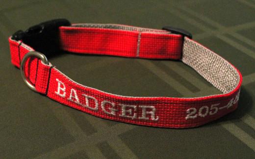 Badger's beautiful new collar.