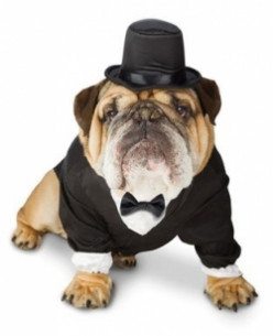Wedding Tuxedos for Dogs