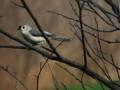 Backyard Birding Do's & Don'ts