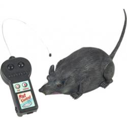 Remote control rat!