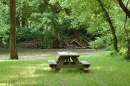 Romantic forest picnic spot- perfect!