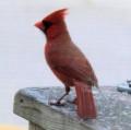 Free Bird Photos - Use These Anywhere