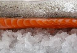 Salmon and other fish are a great source of omega 3 fatty acids