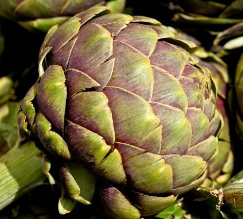 A Magnificent Artichoke