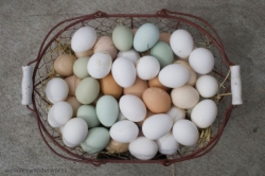 Don't put all your eggs into one basket!