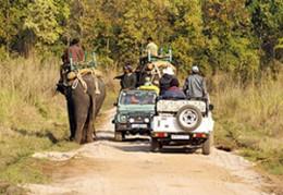 Park Safari Photo