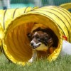 Agility training - the perfect way to get a dog in motion