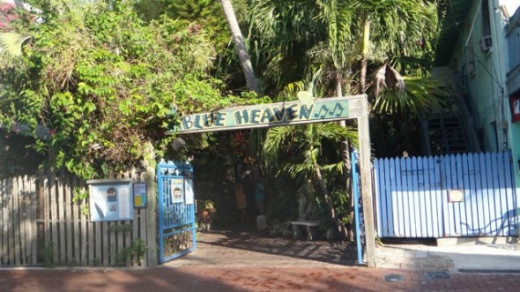 Blue Heaven is one of the best restaurants in Key West. Dogs are welcome too so we're frequent visitors.