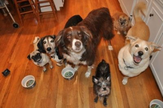 Yes (sigh) there's 6 dogs in this photo...