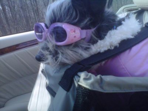Gizmo was born to ride and is aptly equipped.