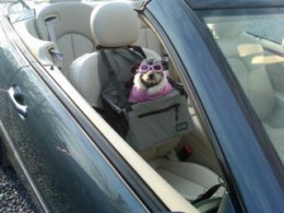 A booster seat is just what this girl needed.