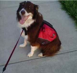 Killian with his Outward Hound backpack