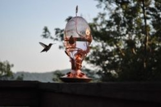 This hummingbird kept my Mom amazed for hours
