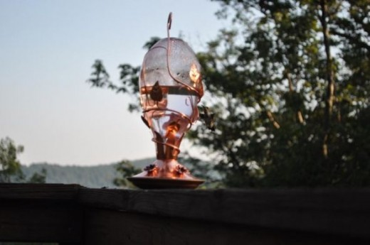 At some points, there were as many as 5 hummingbirds enchanting my Mom around this feeder