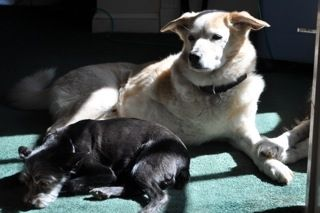 Hops and Gizmo compete for the sunny spot.