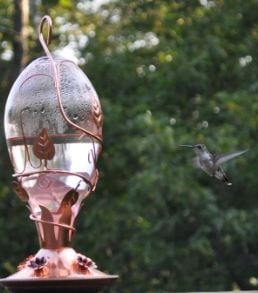 The feeder was set out at 10 am