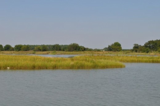 The marshy area of Tilghman. This area is home to eagles and osprey.