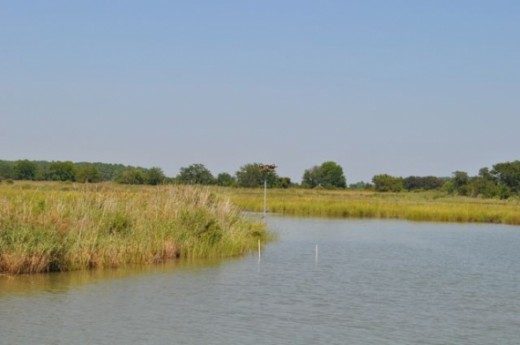 Another view of some beautiful wetlands on the Chesapeake Bay.