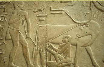 A bas relief showing Egyptian farmers with their cattle. The cattle did agricultural labor, and their dung was used for fuel.