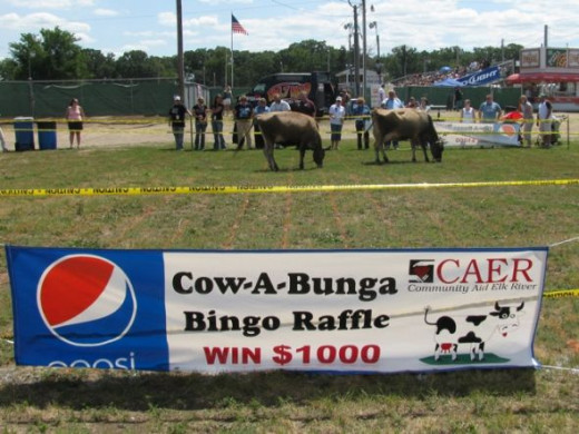 Bernick's Pepsi Banner Donations along with Cows/Grid