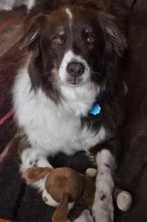 Killian loves his walks and his toys
