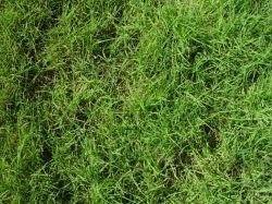Monroe's lawn