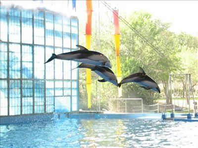 Dolphins in the Viva Show